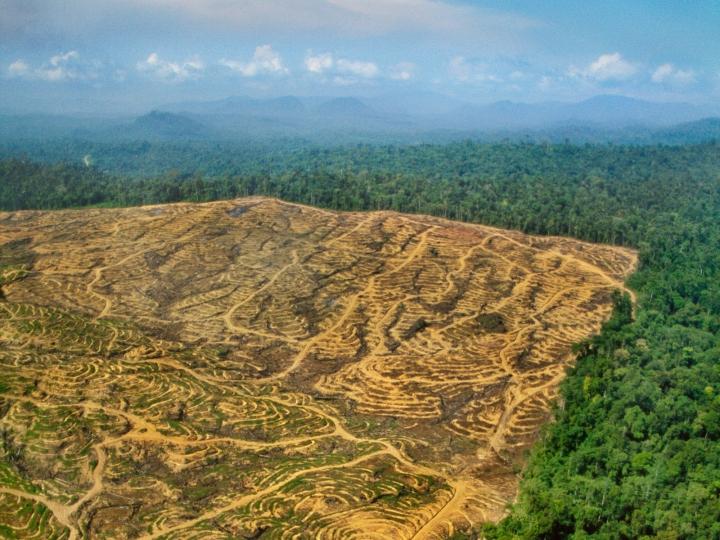 deforestation-a-borneo-pour-l-exploitation-de-l-huile-de-palme